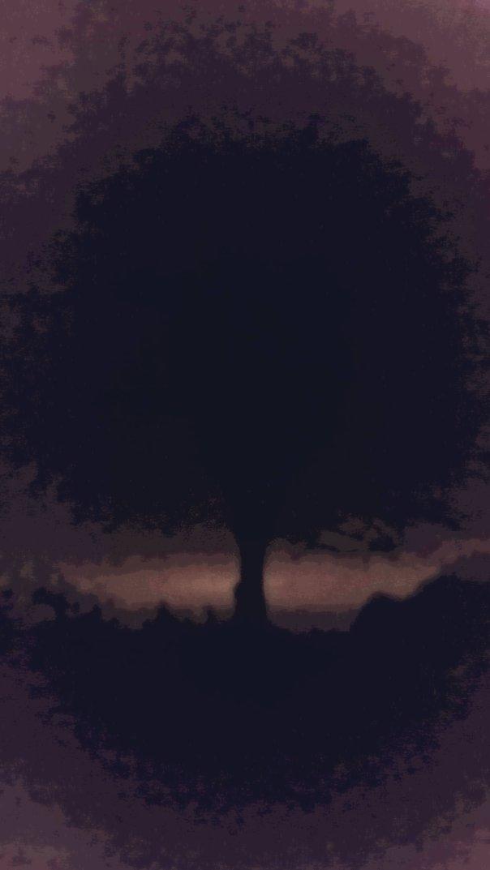 night tree two